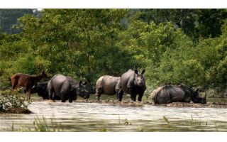 Flood leads to dead of more than 140 animals in Assam