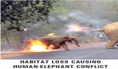 HABITAT LOSS CAUSING HUMAN-ELEPHANT CONFLICT