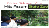 Canine Distemper Virus Hits Assam State Zoo